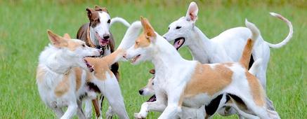 Residencia canina formularios kizeo forms
