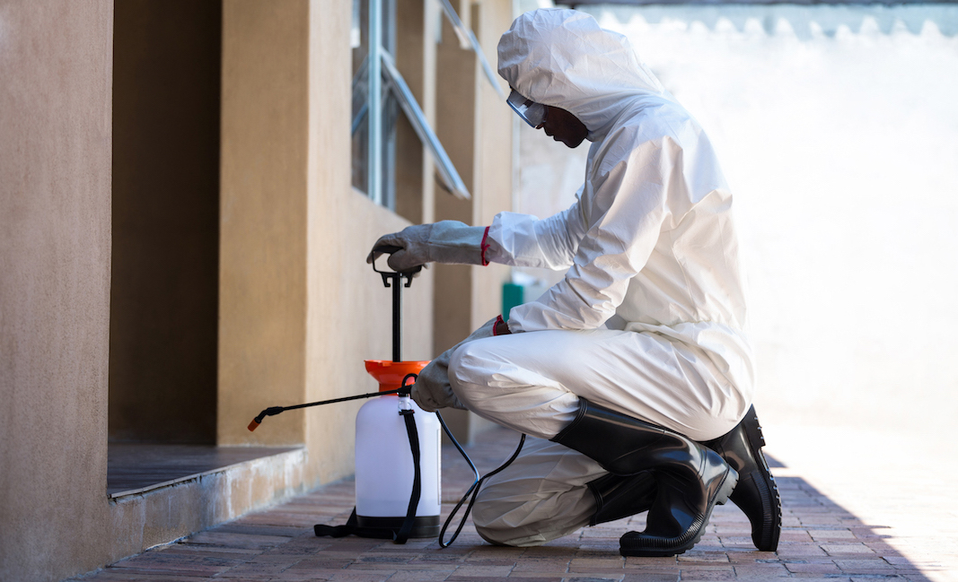 Ensure a pest-free site with this pest inspection app - Kizeo Forms